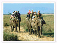 Elephant Ride, Royal Chitwan National Park